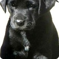 Adopt A Pet :: Charming - Pawling, NY