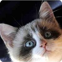 Adopt A Pet :: Deanna - Columbus, OH