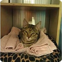 Adopt A Pet :: Tabitha - Greenville, SC