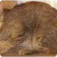 Adopt A Pet :: Abigail - Davis, CA