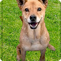 Adopt A Pet :: Luna therapy dog - Sacramento, CA