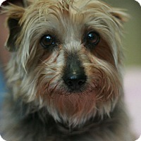 Adopt A Pet :: Laurel - Canoga Park, CA