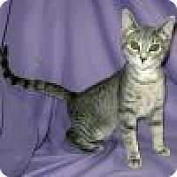 Adopt A Pet :: Gia - Powell, OH