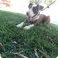 Adopt A Pet :: Molly - Bakersfield, CA
