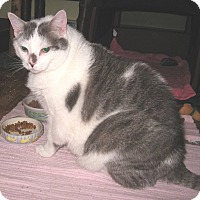 Adopt A Pet :: Max - Colmar, PA