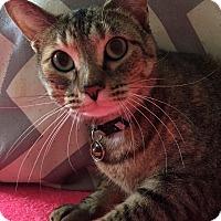 Adopt A Pet :: Chlora - Addison, IL