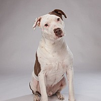 Adopt A Pet :: Brutus - Houston, TX