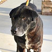Adopt A Pet :: Hoosier - Maryville, TN