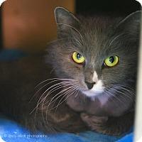 Adopt A Pet :: Smoke - Tucson, AZ