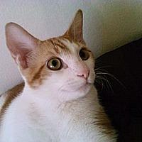 Adopt A Pet :: Jacobo - Cerritos, CA