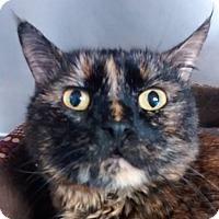 Adopt A Pet :: Cheryl - Springfield, VT