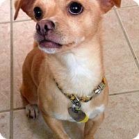 Adopt A Pet :: Olaf - Fennville, MI