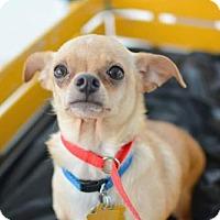 Adopt A Pet :: Dobe - Salt Lake City, UT