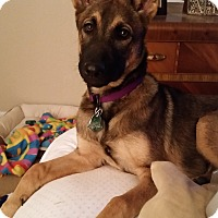 Adopt A Pet :: Annie - Hamilton, MT