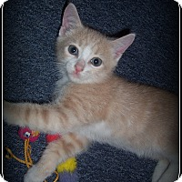 Adopt A Pet :: Markee - South Plainfield, NJ