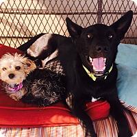 Adopt A Pet :: Frederick - Brattleboro, VT
