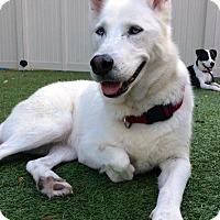 Adopt A Pet :: LOVE US BOTH!!! - Ft Myers Beach, FL