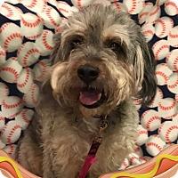 Adopt A Pet :: Dollar Dog Night - Cleveland, OH
