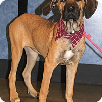 Adopt A Pet :: Gretal - New Oxford, PA