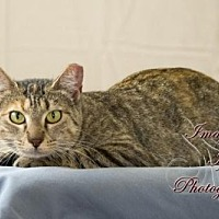 Adopt A Pet :: Gypsy - Crescent, OK