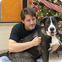 Adopt A Pet :: Gypsy - Elyria, OH
