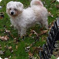 Adopt A Pet :: Phoebe - Elgin, IL