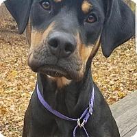 Adopt A Pet :: Kia - Breinigsville, PA