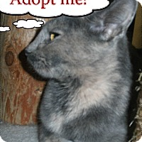 Adopt A Pet :: Cairo - Milwaukee, WI