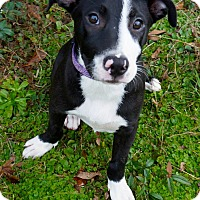 Adopt A Pet :: Tinley - Valley Stream, NY
