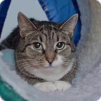 Adopt A Pet :: Jill - Wilmington, DE