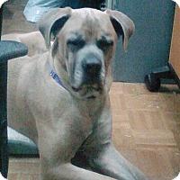 Adopt A Pet :: ZANY - Chicopee, MA