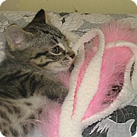 Adopt A Pet :: Katniss - Sunderland, ON