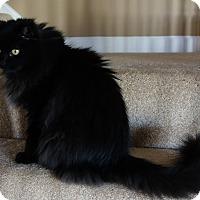 Adopt A Pet :: Hershey - brewerton, NY