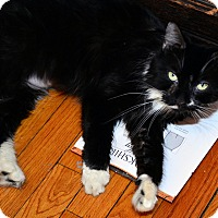 Adopt A Pet :: Willow - Brooklyn, NY