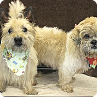 Adopt A Pet :: Bobby & Tiny - Forked River, NJ