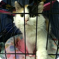 Adopt A Pet :: Clarabelle - Byron Center, MI