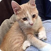Adopt A Pet :: Mr. West - Morgantown, WV