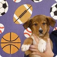Adopt A Pet :: Sam - Oviedo, FL