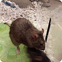 Adopt A Pet :: ISAIAH and JONAH (NEUTERED!) - Philadelphia, PA