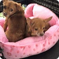 Adopt A Pet :: Teagan - staten Island, NY