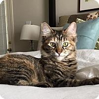 Adopt A Pet :: Audrey - DFW Metroplex, TX