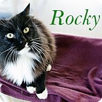 Adopt A Pet :: Rocky - Hamilton, MT