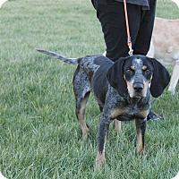 Adopt A Pet :: Dusty - cicero, NY