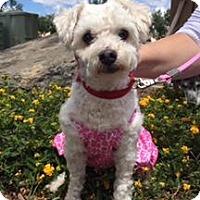 Adopt A Pet :: Chiquita - El Cajon, CA