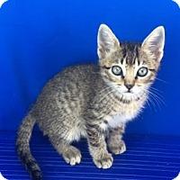 Adopt A Pet :: Benji - Carencro, LA
