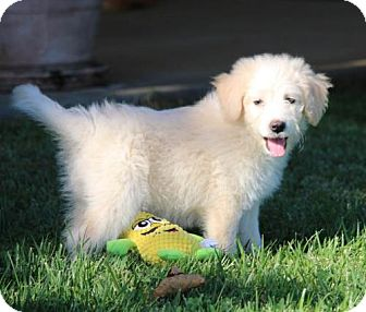 German Shepherd Dog/Terrier (Unknown Type, Medium) Mix Dog for adoption in San Diego, California - Loren