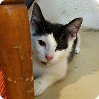 Adopt A Pet :: Ian - Trevose, PA