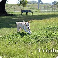 Adopt A Pet :: Triple G - Texarkana, AR