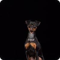 Adopt A Pet :: Oliver - Courtesy Post - kennebunkport, ME