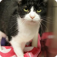 Adopt A Pet :: Izzy - Camden, DE